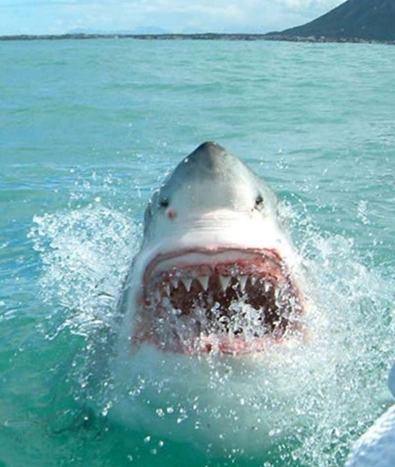 Dangerous-sharks