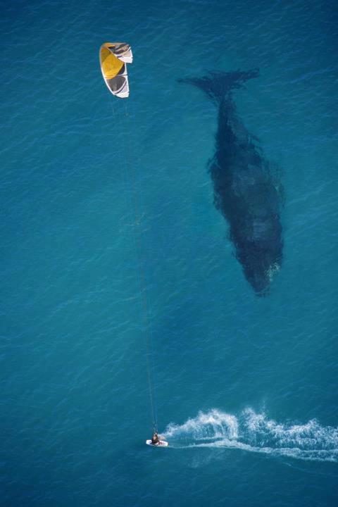 Whaleofatale