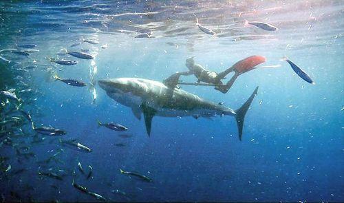 A man and his pet shark