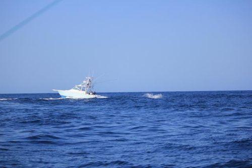 Marlin 01