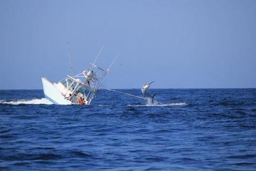 Marlin 04