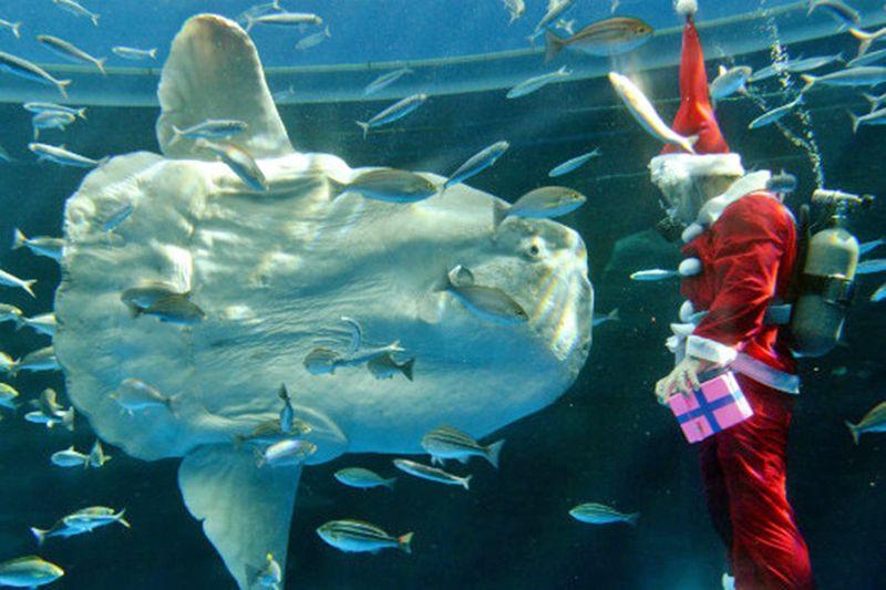Santa and the fish