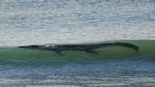 Un-crocodile-de-4-metres-surf-en-australie (3)