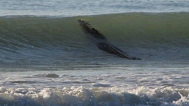 Un-crocodile-de-4-metres-surf-en-australie (2)