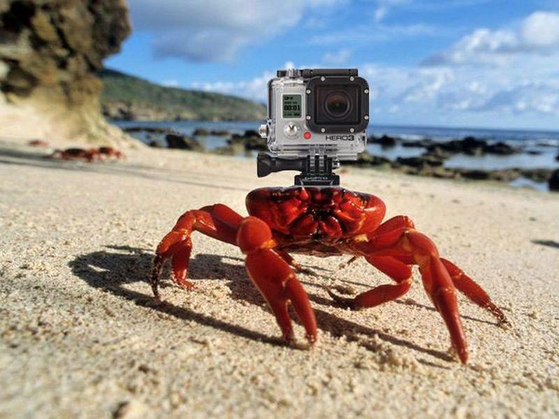 Crabcam