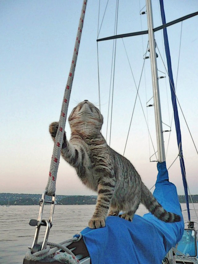 Cat-on-boom-of-boat