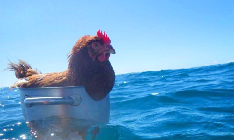 Chickenpotboat