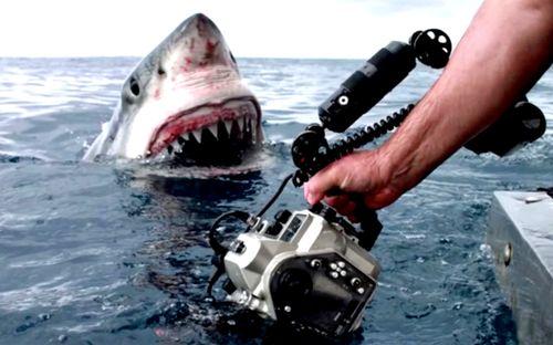 Shark-potd_3300816k