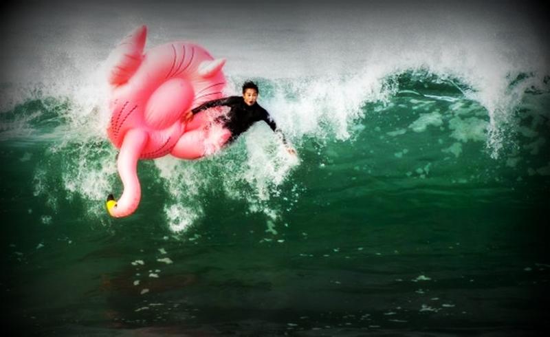 Flamingo.20
