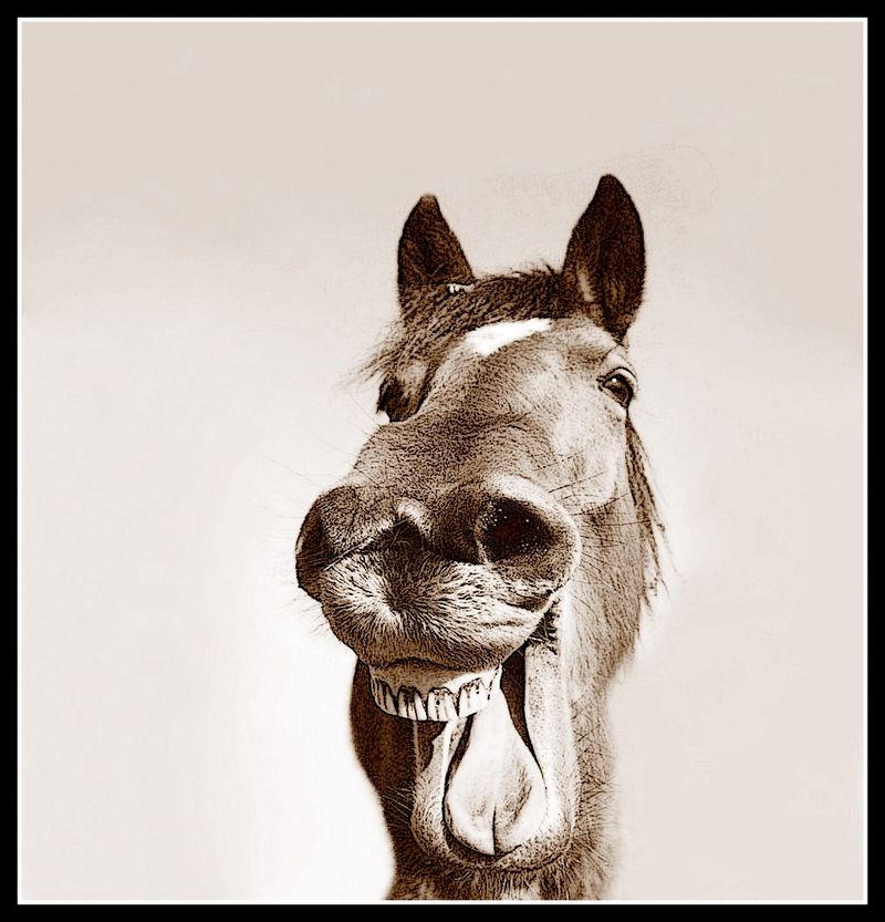 Laughing-picture-of-horse-sepia
