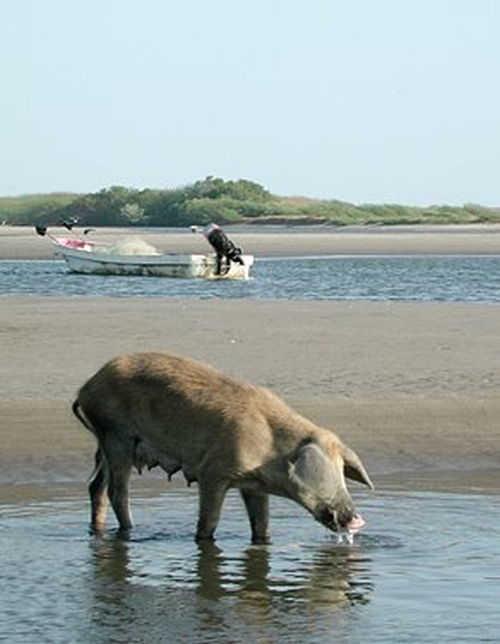The Horse's Mouth: Today's Barnyard Animal At The Beach
